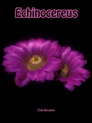 Echinocereus - Duke Benadom